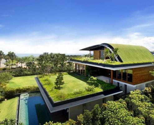 Cây xanh trên nhà mái tôn