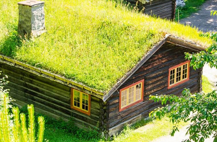 Image result for nhà mái tôn lạnh có vườn