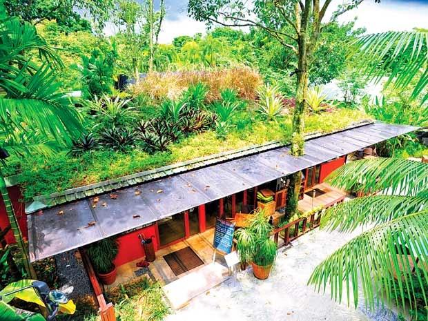 Tận dụng mái tôn làm 1 khu vườn xanh